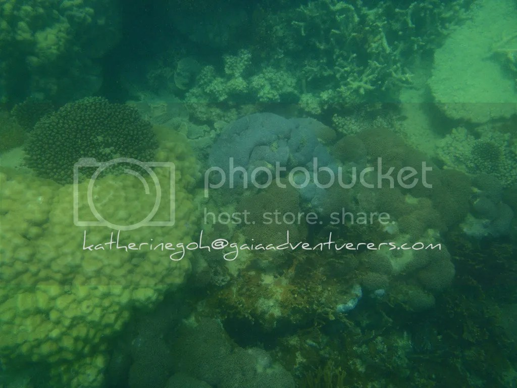 More Corals