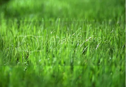 GrassStuff Pictures, Images and Photos