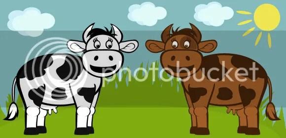 Image result for con bò và CNXH