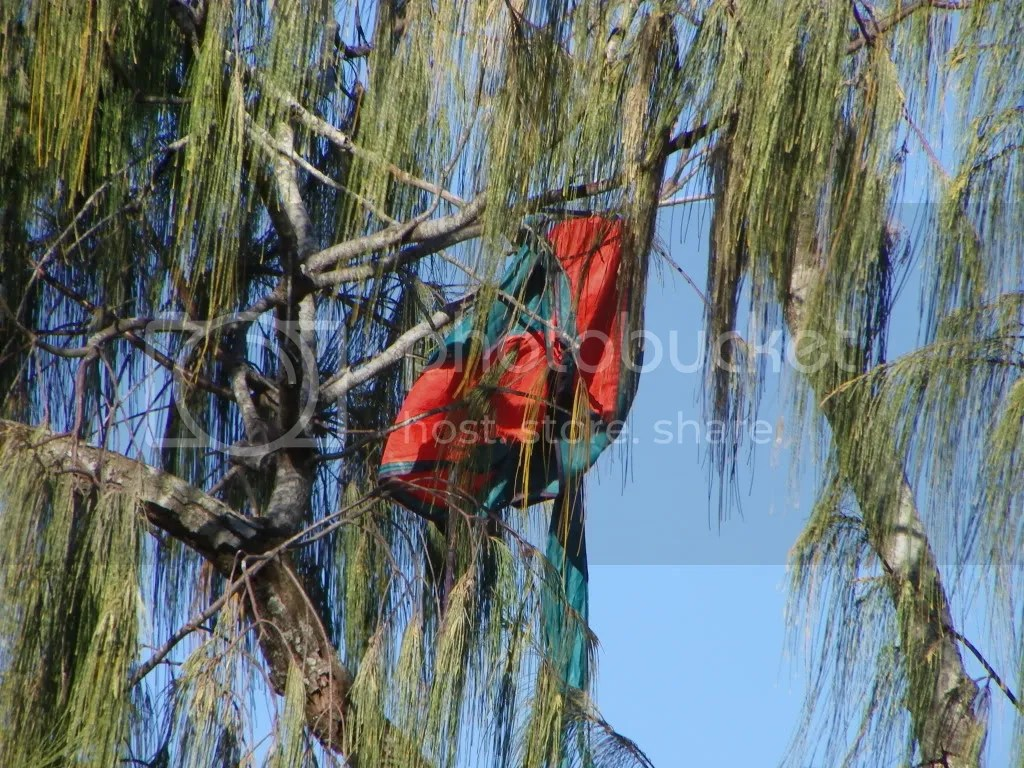 Kite eating tree