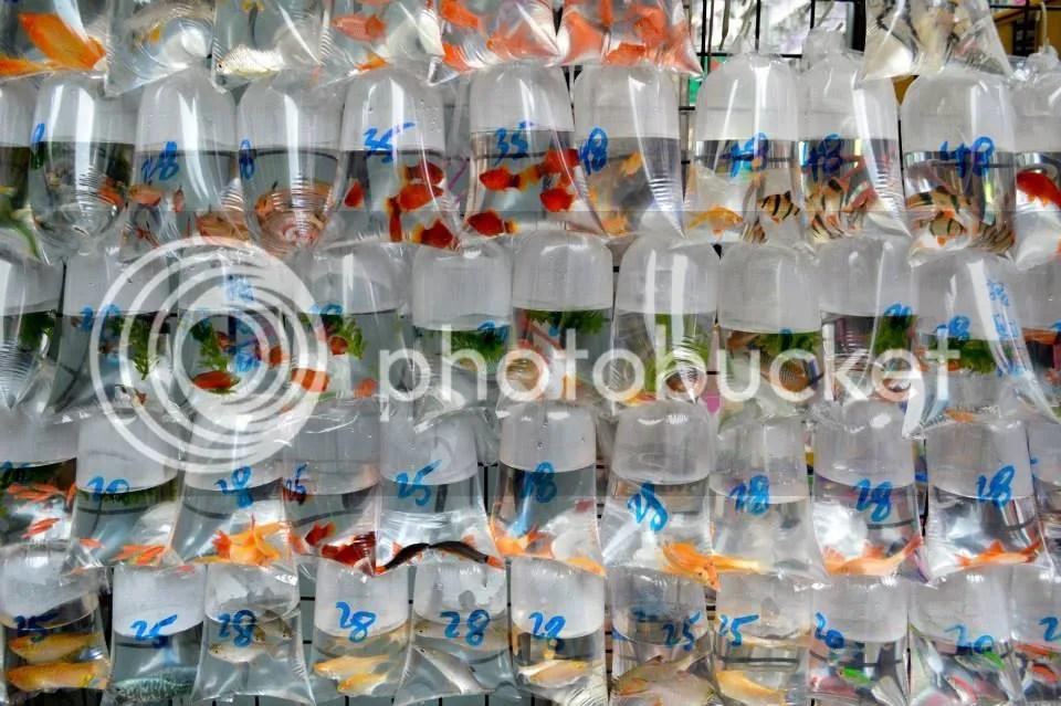 Poor fishes photo 1901359_10152015995352921_308319992_n.jpg