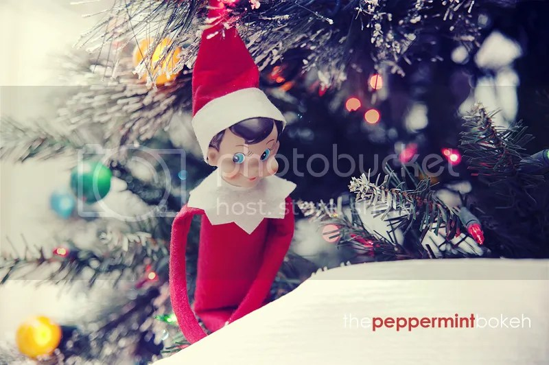 https://i1.wp.com/i1193.photobucket.com/albums/aa348/PeppermintBokeh/Molly_November2012_0401.jpg