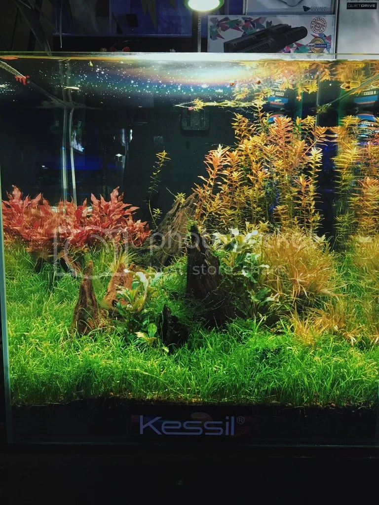 Planted tank kessil.jpg