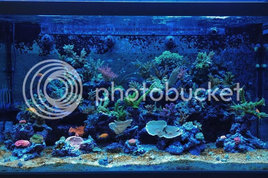 Reef Tank Neptune Aquatics.jpg