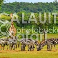 Coron, Palawan: Calauit Island Safari