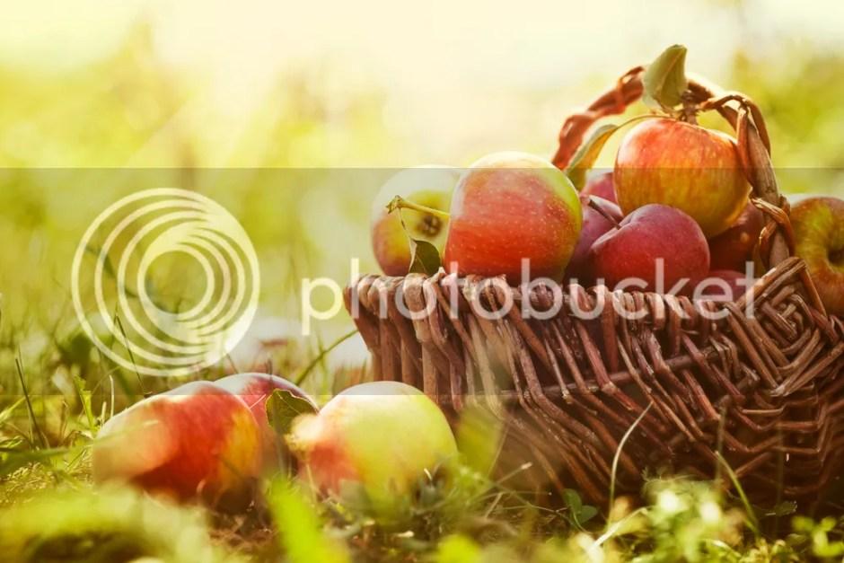 Apel - Baguz.net