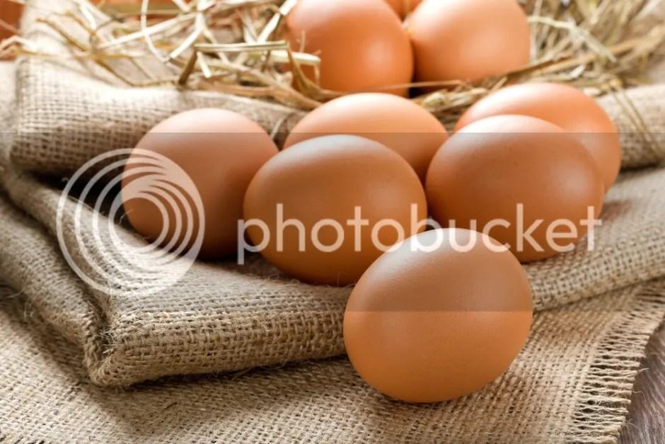 Telur - Baguz.net