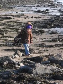 Searching for Seashells on Holy Island