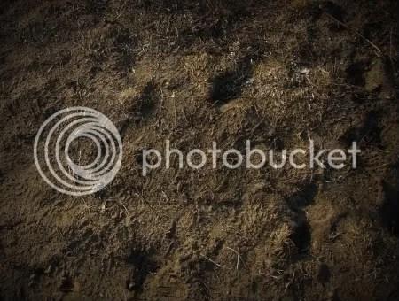 Soil poem