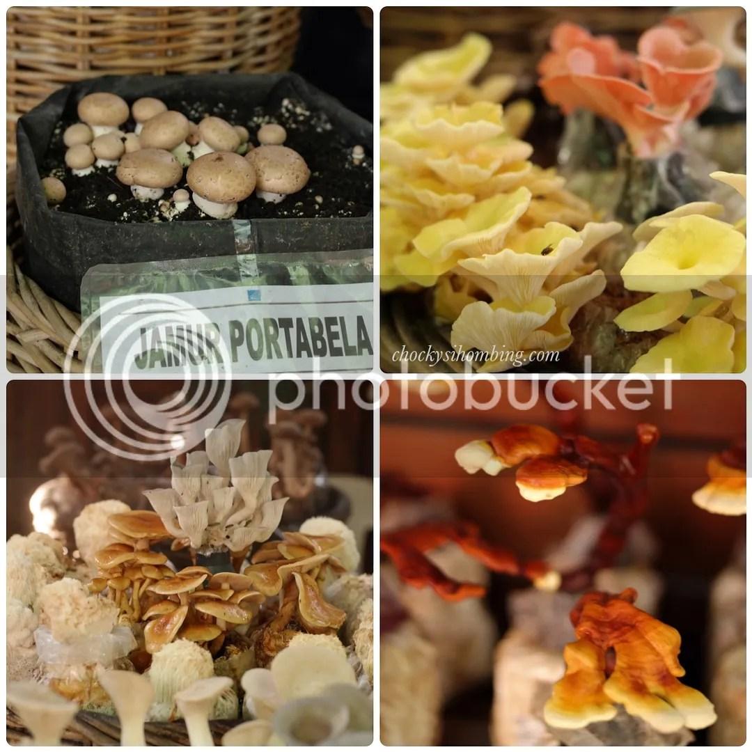 Jamur jamuran di jeJamuran - Jogja