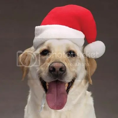photo christmasdog.jpg
