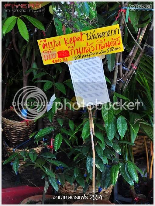 งานเกษตรแฟร์ 2554, งานเกษตรบางเขน, Kaset fair, บรรยากาศงานเกษตรแฟร์, ตลาดต้นไม้, ไม้หายาก, ต้นไม้, ดอกไม้, aKitia.Com