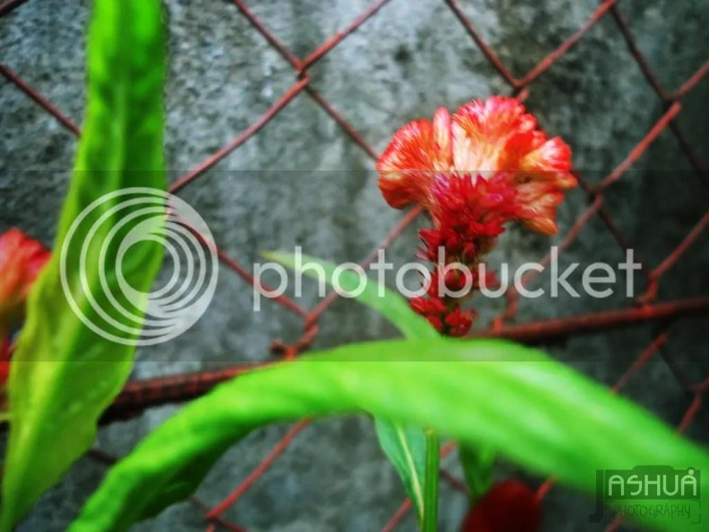 Flower C