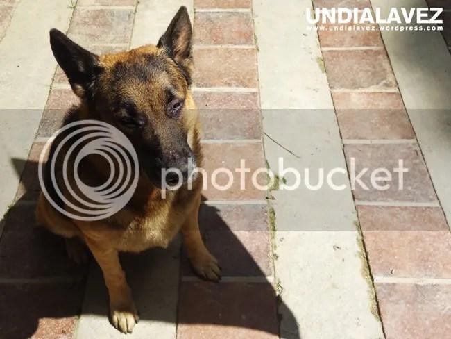 Vida de Perros 3
