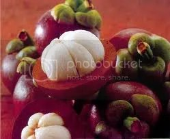 Growing Mangosteen for Business agribusiness