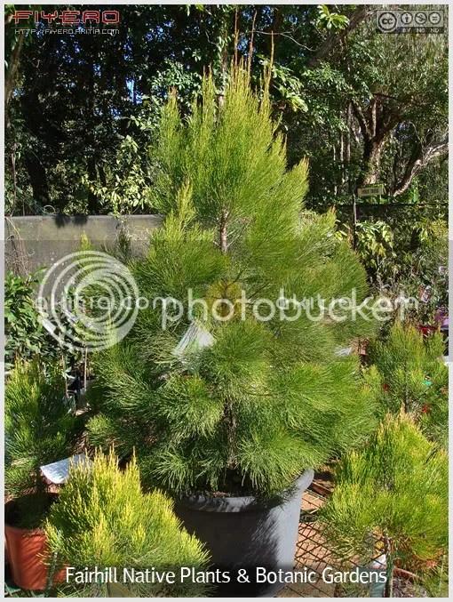Fairhill Native Plants and Botanic Gardens, ร้านต้นไม้, สวนต้นไม้, ต้นไม้, ดอกไม้, aKitia.Com