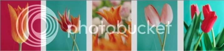 photo 3bbe4337-d04b-4a52-bc57-33adb08fd047_zps04b57796.jpg