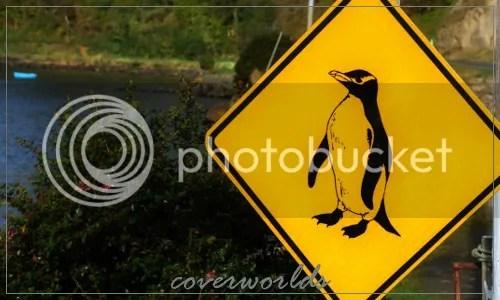 Stewart Island 4