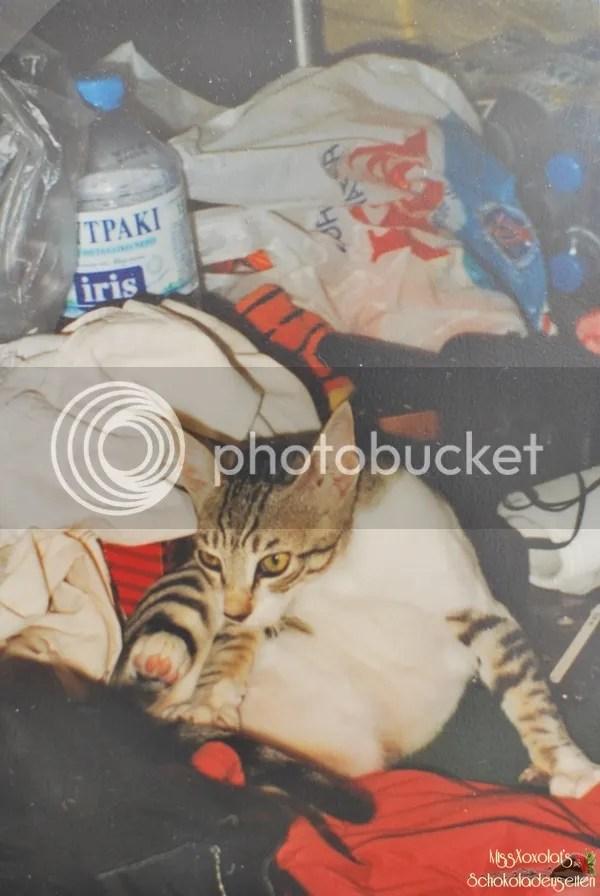 Katze im Zelt