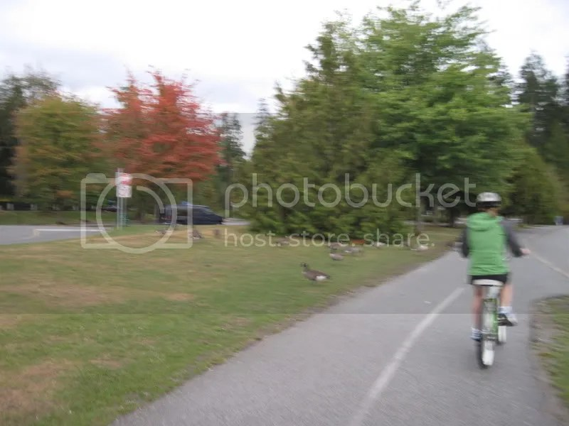 Blurry, but had to show you some Canadian geese!