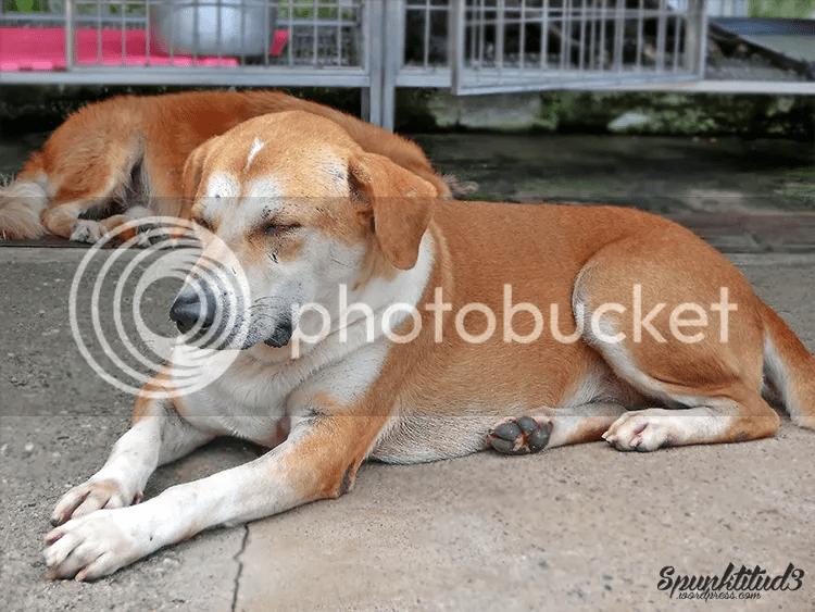 Animal Shelter Pasir Ris Farmway