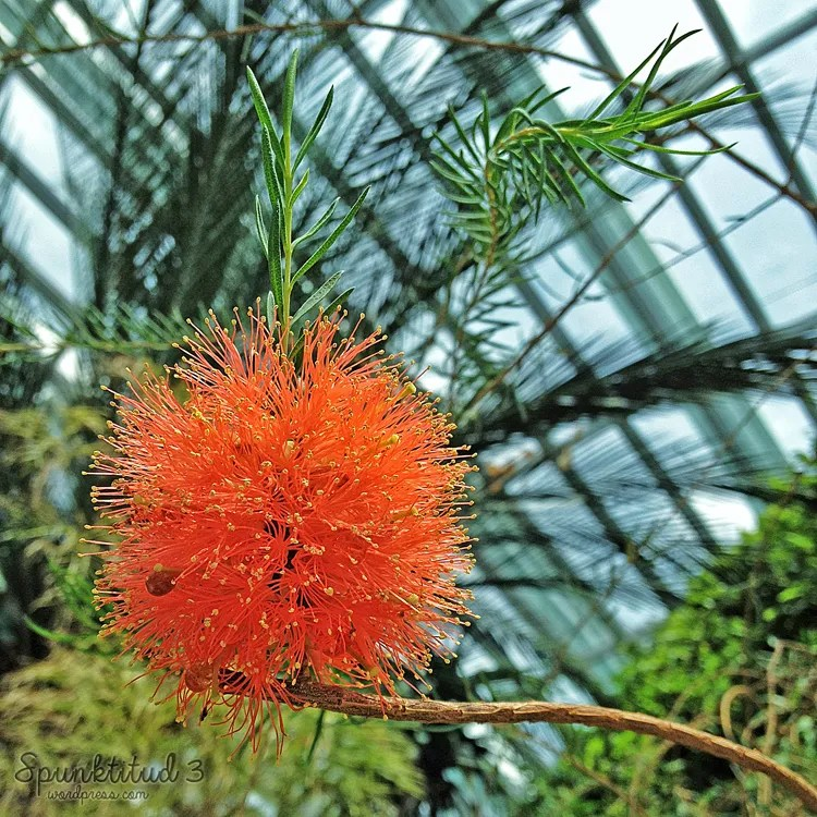 Floral Balls