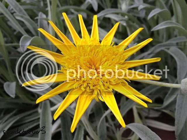 Yellow Flower Macro Photography