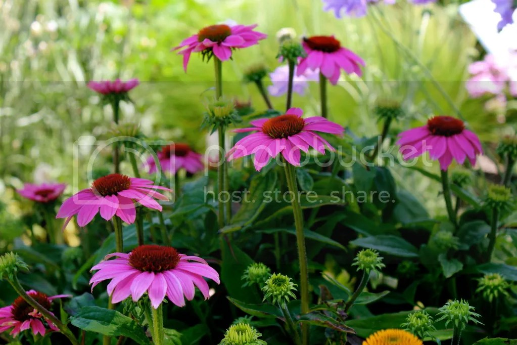 Grow Herbaceous Perennials - How to multiply with division