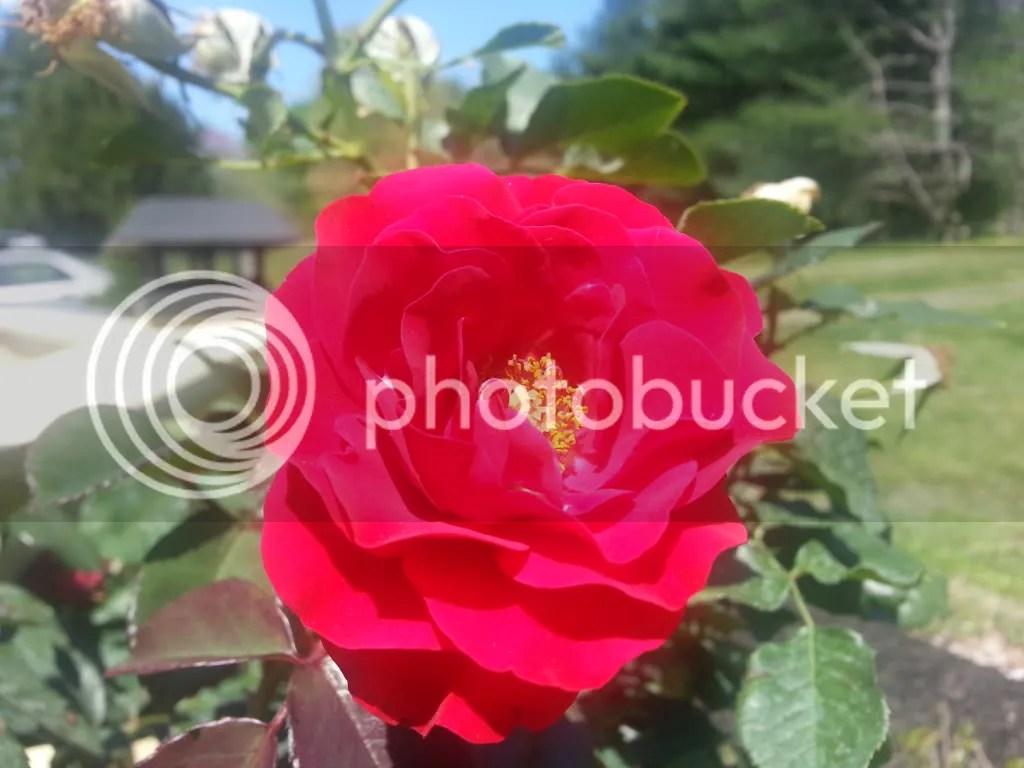 photo 20130420_135501_zps09e0ef4d.jpg