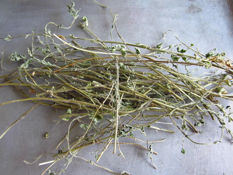 How to Grow and Dry Herbs / MyUrbanGardenOasis