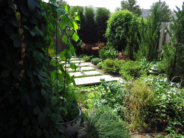 Simply My Backyard / MyUrbanGardenOasis