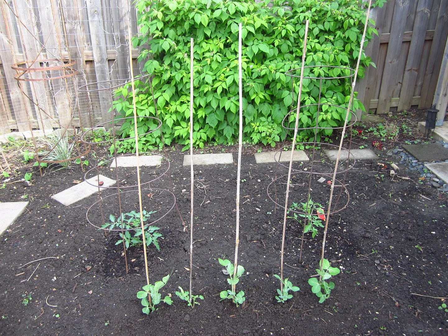 Re-plant Your Thinned Seedlings / MyUrbanGardenOasis