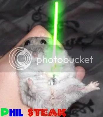 hamster photo: hamster hamster-1.jpg