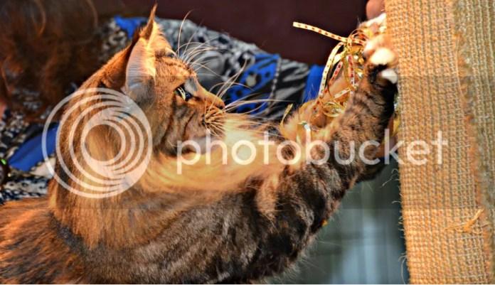 CatShowfolder2286_zps7ad78882
