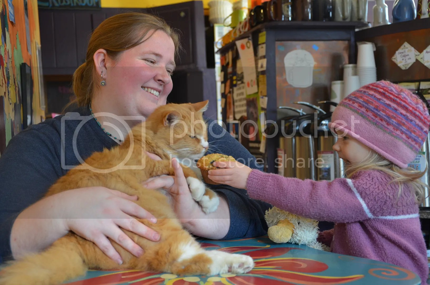 The Orange Cat Cafe Cat 1gets a cupcake photo DSC_3186_zps47658683.jpg