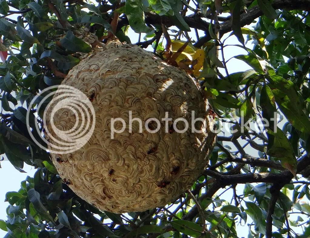 wsps nest 171012  cbn pk