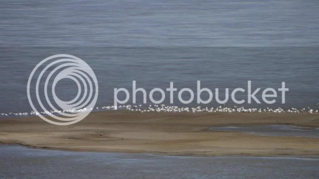 gulls rash bash 230313 photo DSC02123.jpg