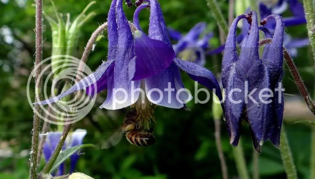 1 Bee STL 180513 photo DSC06956.jpg
