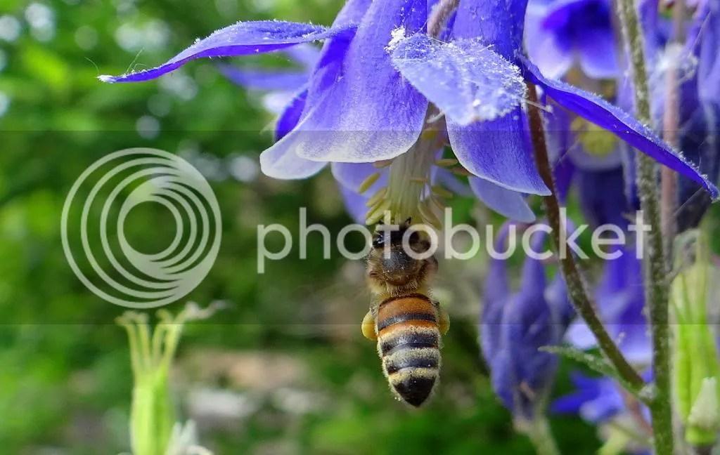 3 Bee STL 180513 photo DSC06960.jpg