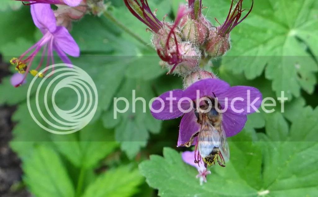 7 Bee STL 180513 photo DSC06968.jpg