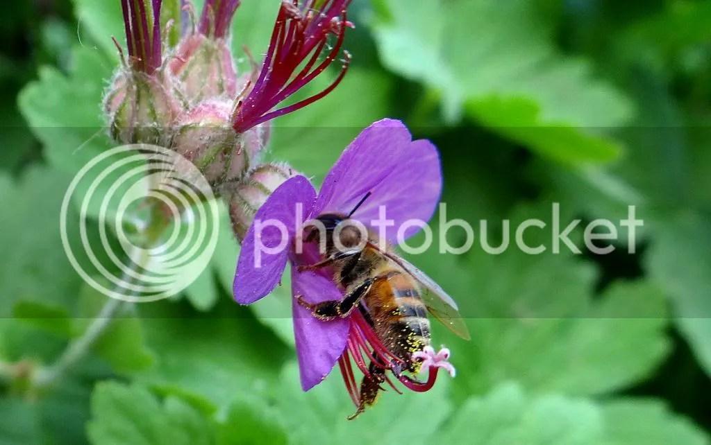 9 Bee STL 180513 photo DSC06970.jpg