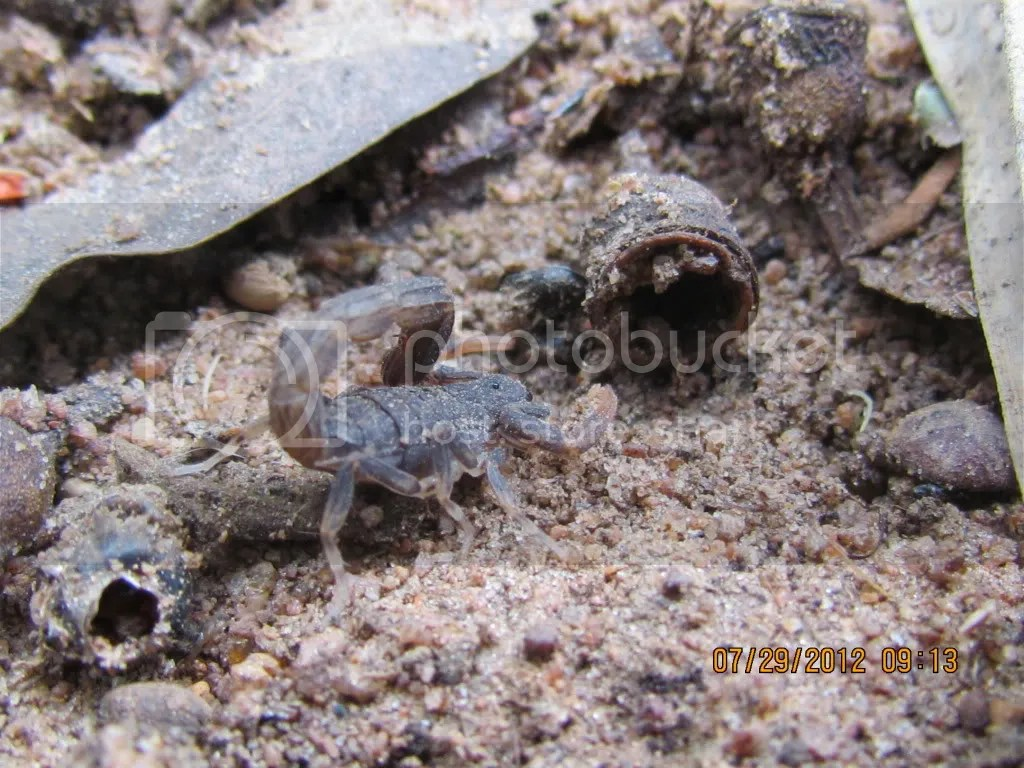 scorpion 290712 jpngr resfrst