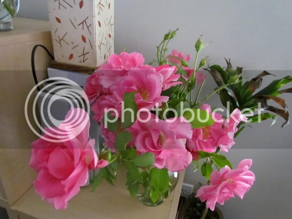 roses funnel web   enright 280612