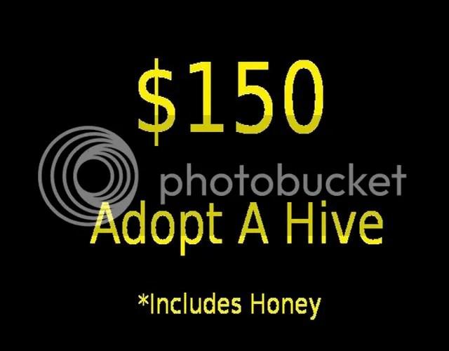 Adoption $150