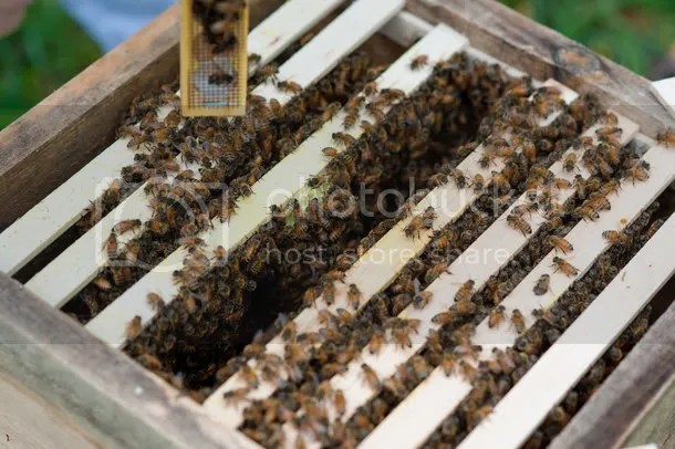 wilton hive