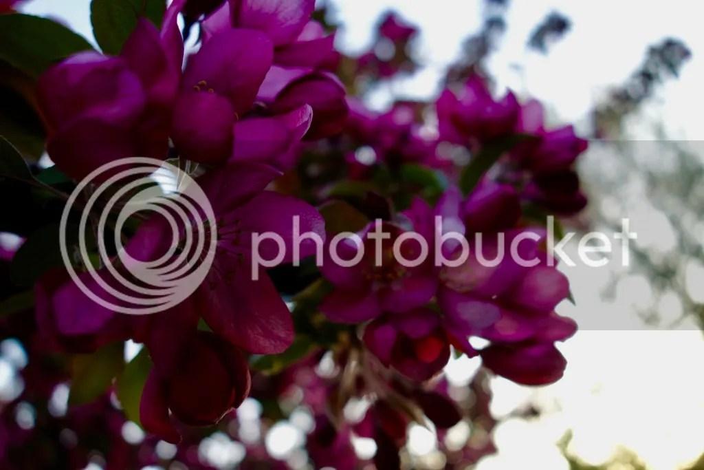 photo DSC04217_zps8nl1ut4h.jpg