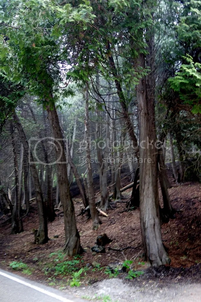 photo Mackinac Island Woods_zpscbnrabxl.jpg