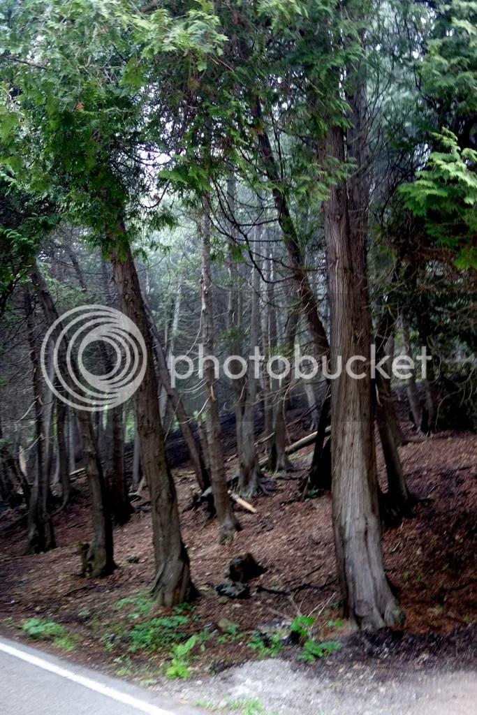 photo Mackinac Island Woods_zpscbnrabxl.jpg