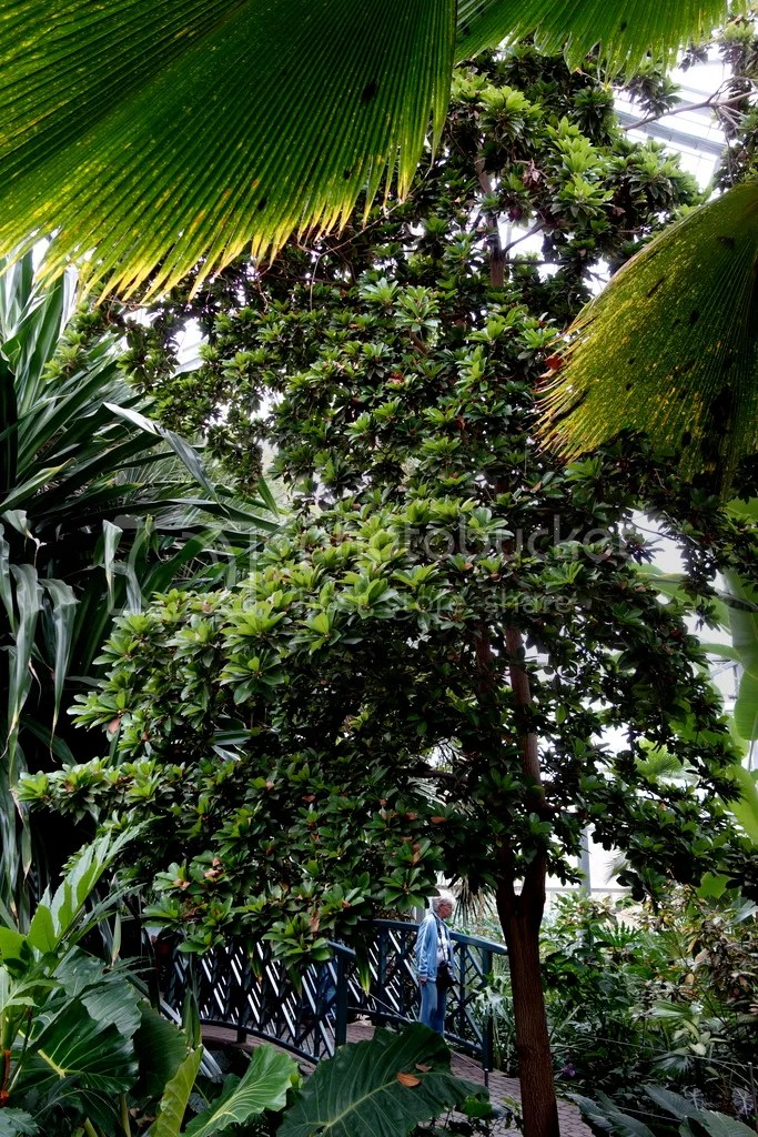 photo Meijer Gardens Tree Tops_zpsnrteppsz.jpg