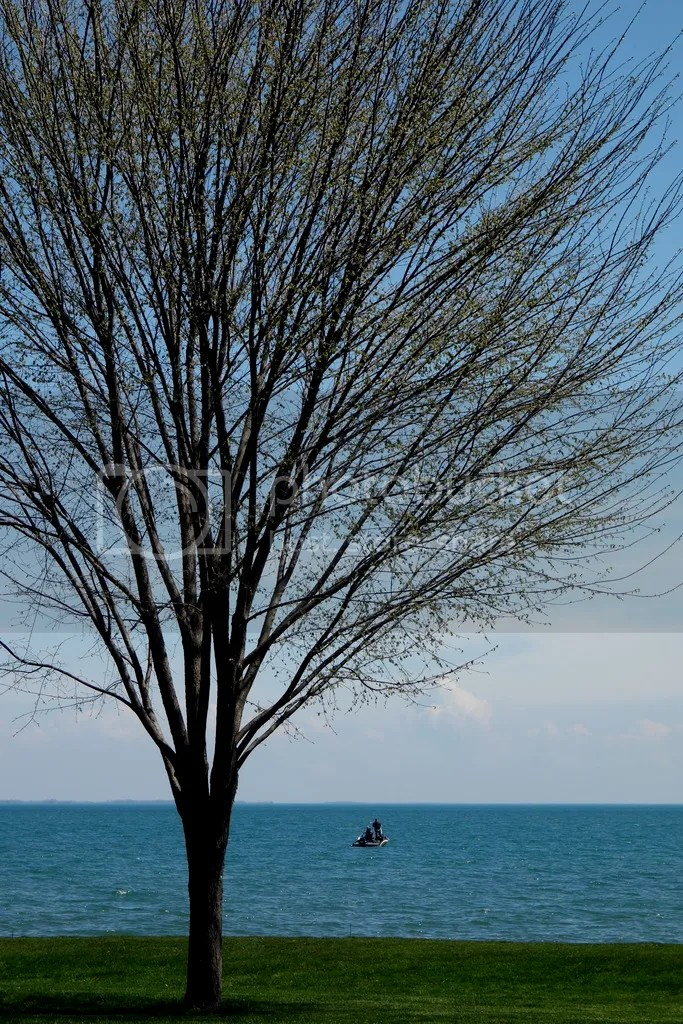 photo Springtime Tree_zpsdfqjp7hd.jpg
